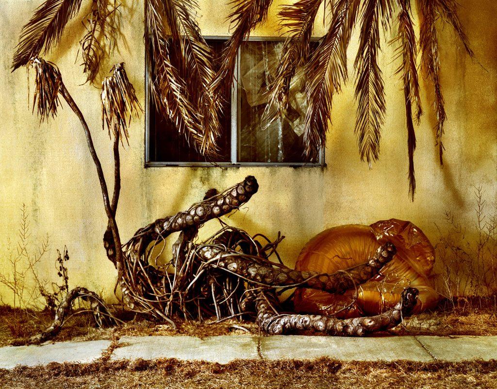 Photographies - GoldenBoys - Jeff Bark 3