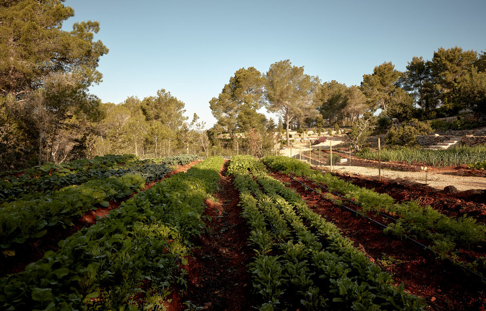 Nature alentours Granja Ibiza